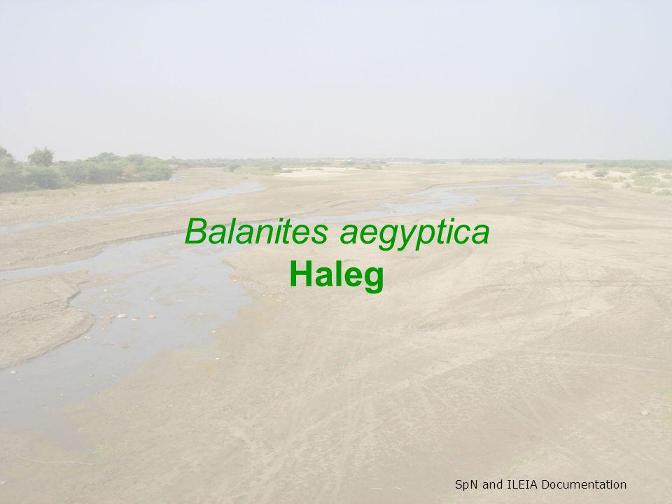 SpN and ILEIA Documentation Balanites aegyptica Haleg