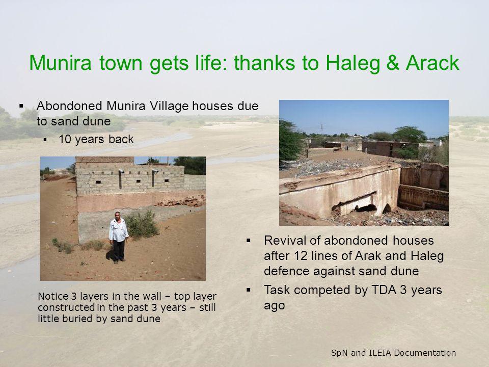 SpN and ILEIA Documentation Munira town gets life: thanks to Haleg & Arack  Abondoned Munira Village houses due to sand dune  10 years back  Reviva