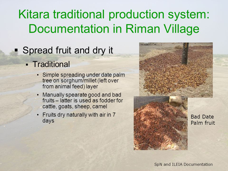 SpN and ILEIA Documentation Kitara traditional production system: Documentation in Riman Village  Spread fruit and dry it  Traditional Simple spread