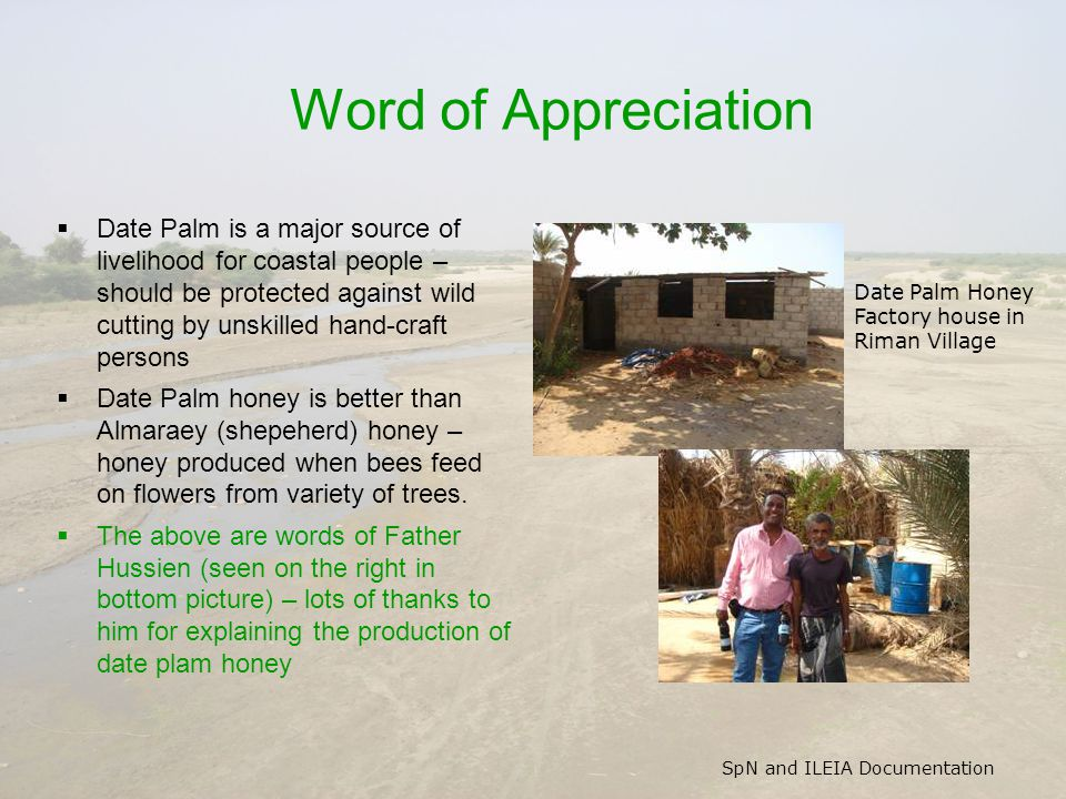 SpN and ILEIA Documentation Word of Appreciation  Date Palm is a major source of livelihood for coastal people – should be protected against wild cutting by unskilled hand-craft persons  Date Palm honey is better than Almaraey (shepeherd) honey – honey produced when bees feed on flowers from variety of trees.
