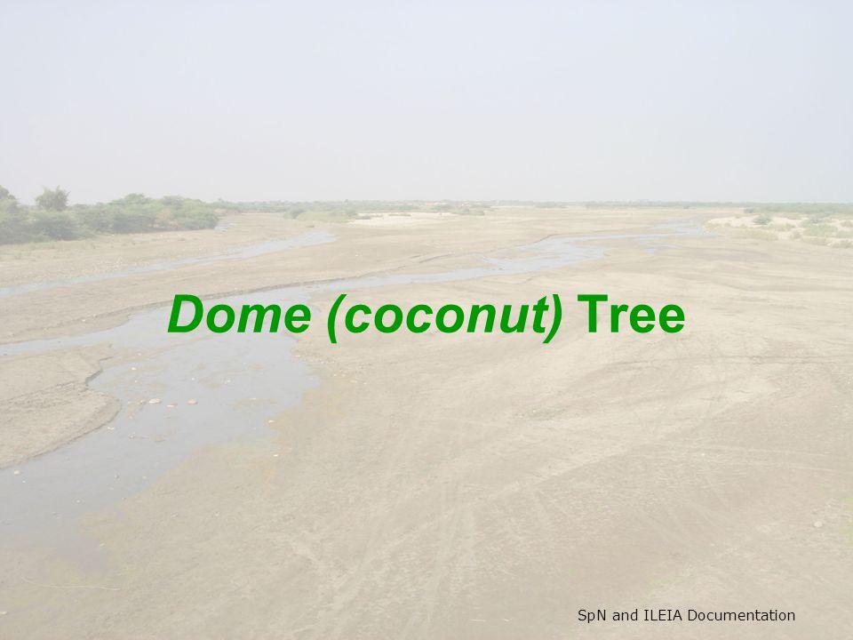 SpN and ILEIA Documentation Dome (coconut) Tree