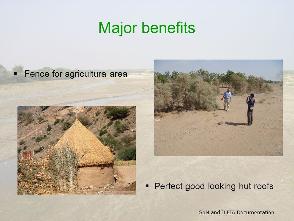SpN and ILEIA Documentation Major benefits  Fence for agricultura area  Perfect good looking hut roofs