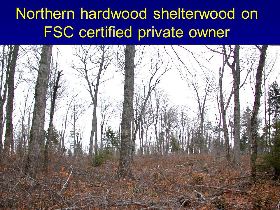 Northern hardwood shelterwood on FSC certified private owner