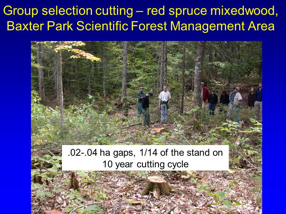 Group selection cutting – red spruce mixedwood, Baxter Park Scientific Forest Management Area.02-.04 ha gaps, 1/14 of the stand on 10 year cutting cyc