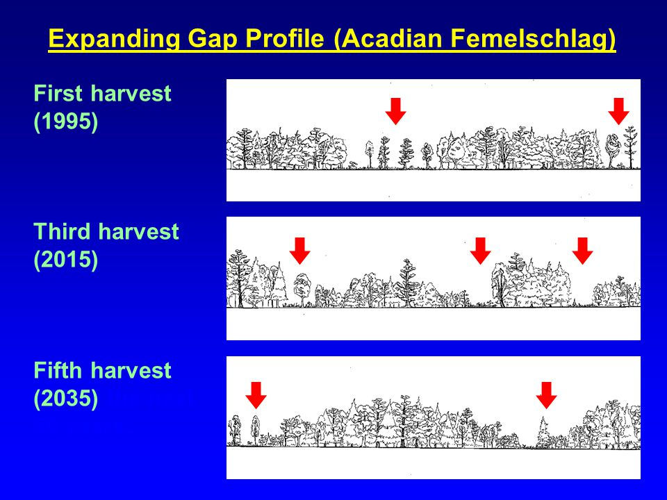 Expanding Gap Profile (Acadian Femelschlag) First harvest (1995) Third harvest (2015) Fifth harvest (2035) the next 50 years.
