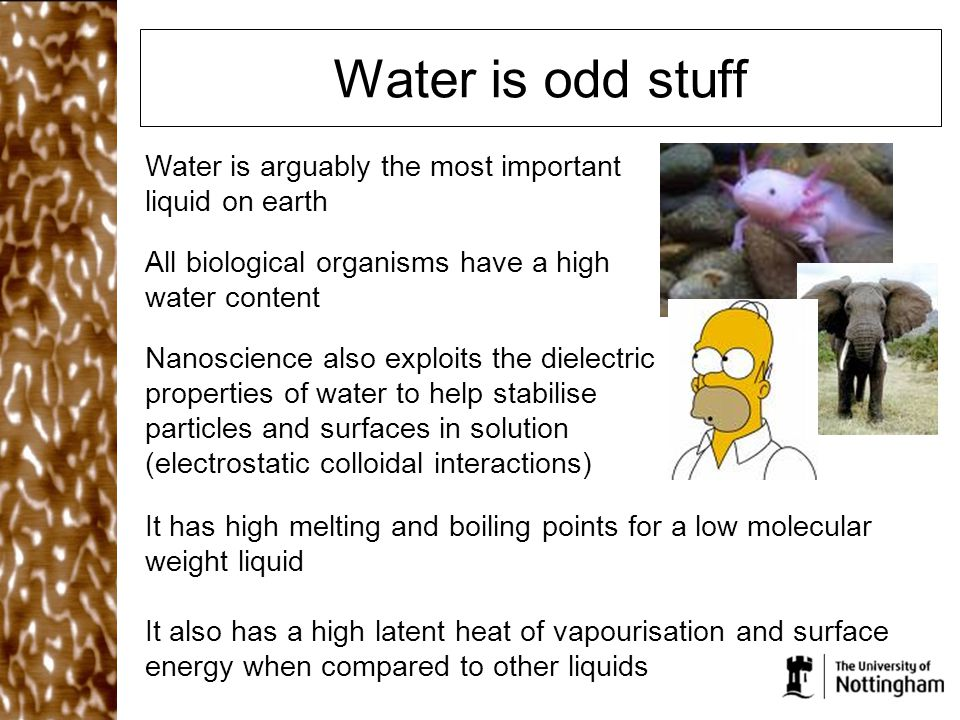 Water is odd stuff It has high melting and boiling points for a low molecular weight liquid It also has a high latent heat of vapourisation and surfac
