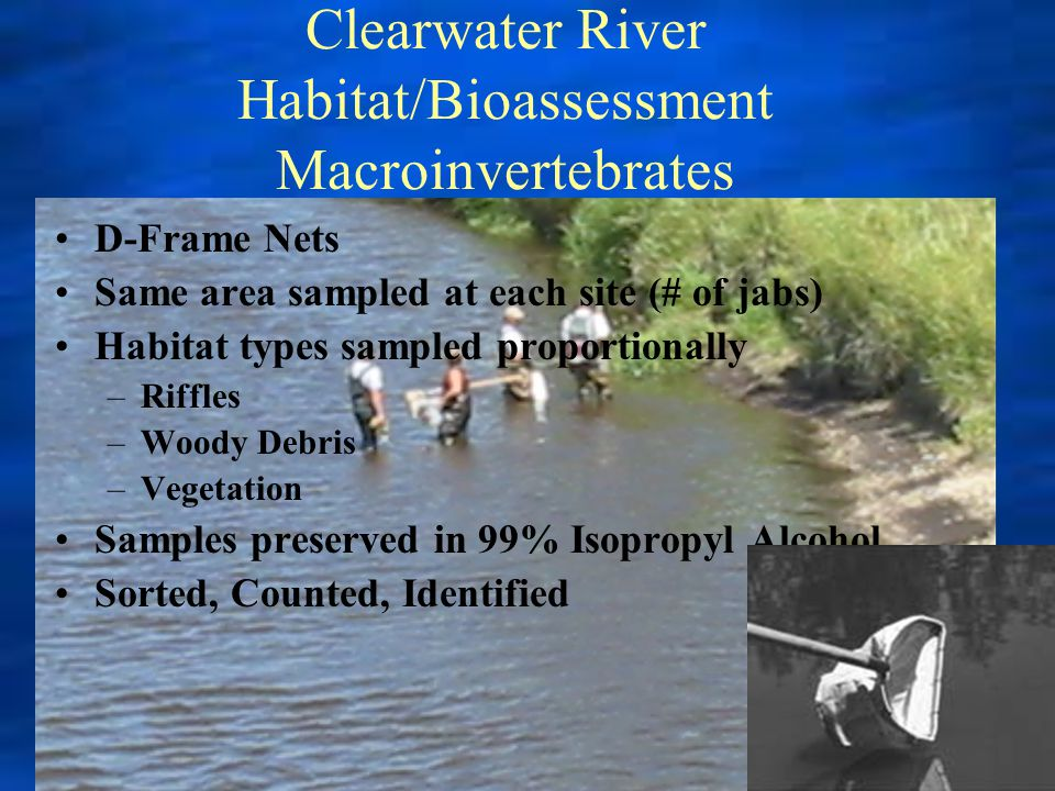 Clearwater River Habitat/Bioassessment Macroinvertebrates D-Frame Nets Same area sampled at each site (# of jabs) Habitat types sampled proportionally –Riffles –Woody Debris –Vegetation Samples preserved in 99% Isopropyl Alcohol Sorted, Counted, Identified