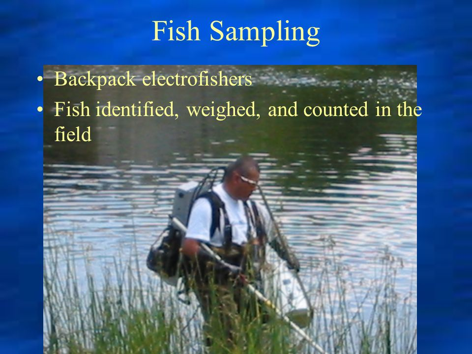 Fish Sampling Backpack electrofishers Fish identified, weighed, and counted in the field