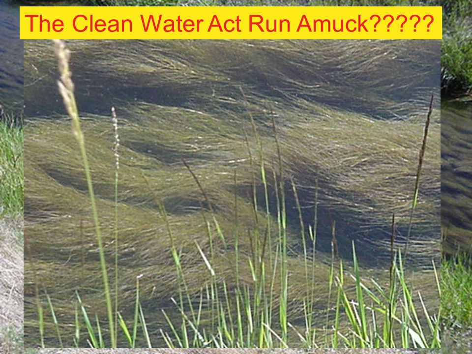 The Clean Water Act Run Amuck