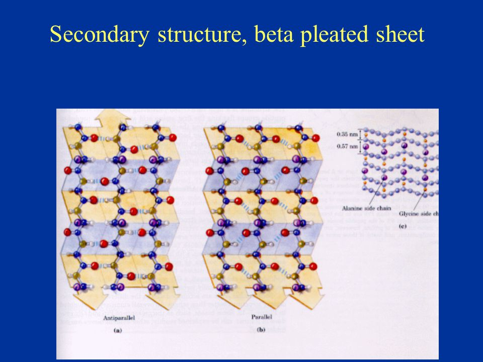 Secondary structure, beta pleated sheet