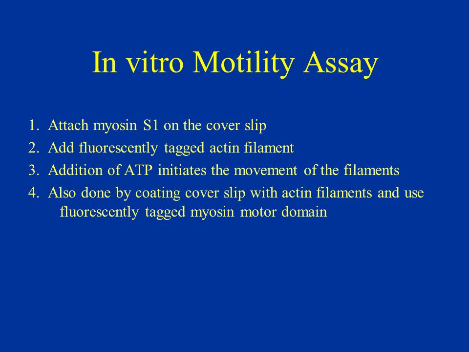 In vitro Motility Assay 1. Attach myosin S1 on the cover slip 2. Add fluorescently tagged actin filament 3. Addition of ATP initiates the movement of