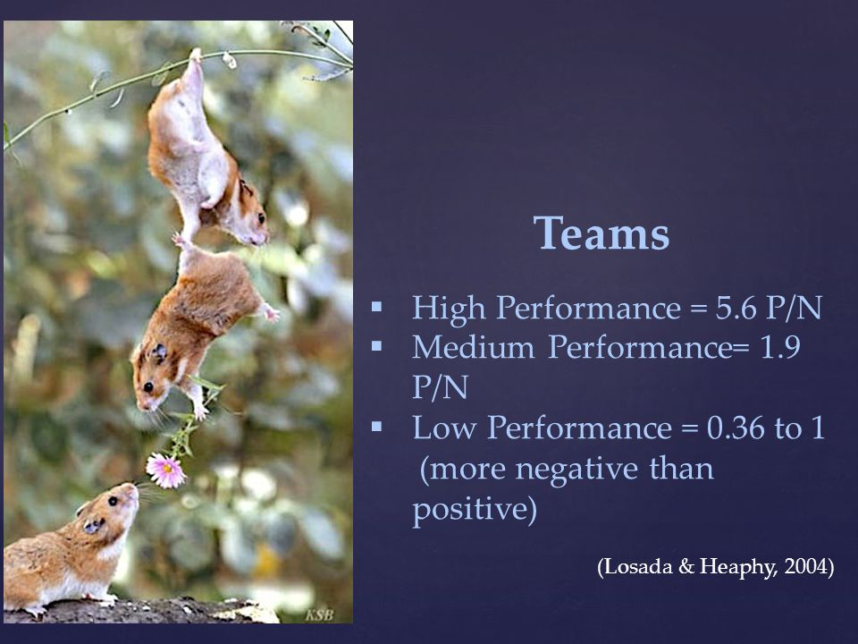 Teams  High Performance = 5.6 P/N  Medium Performance= 1.9 P/N  Low Performance = 0.36 to 1 (more negative than positive) (Losada & Heaphy, 2004)