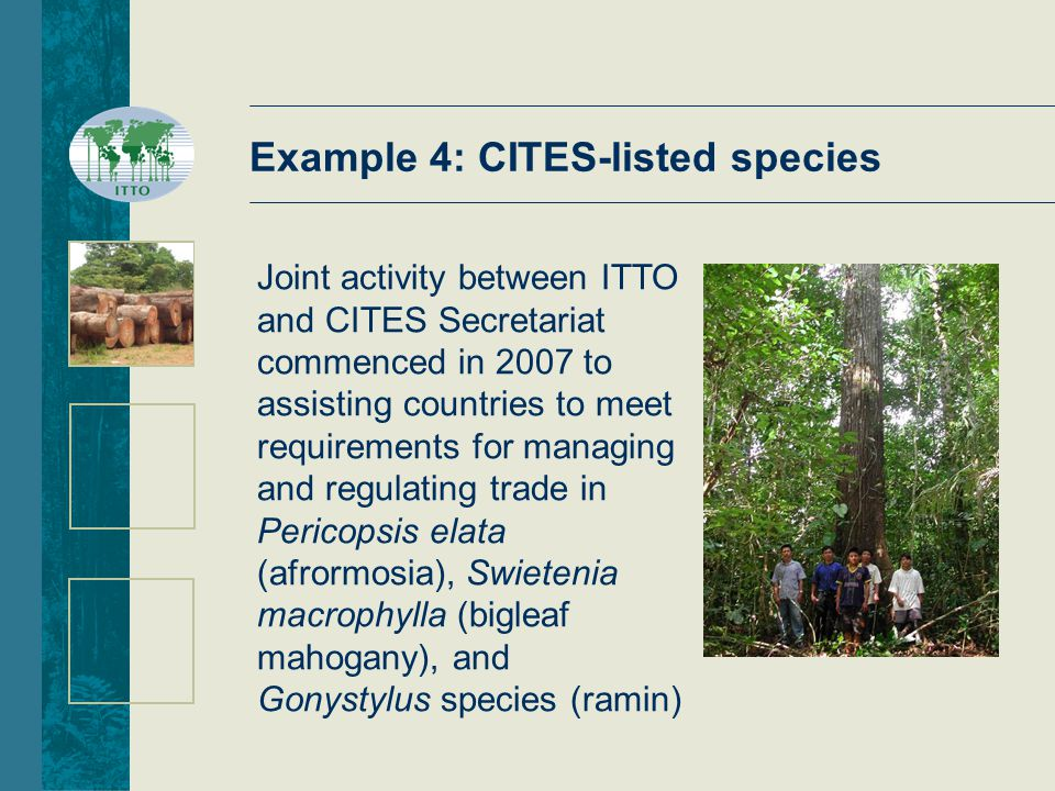 Example 4: CITES-listed species Joint activity between ITTO and CITES Secretariat commenced in 2007 to assisting countries to meet requirements for managing and regulating trade in Pericopsis elata (afrormosia), Swietenia macrophylla (bigleaf mahogany), and Gonystylus species (ramin)