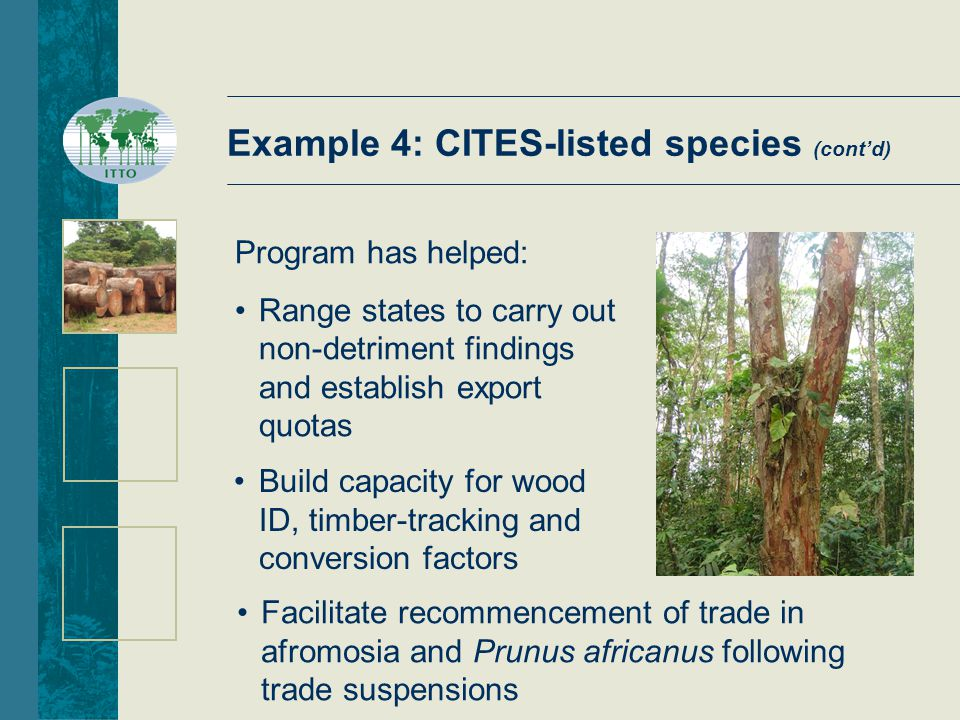 Example 4: CITES-listed species (cont'd) Program has helped: Range states to carry out non-detriment findings and establish export quotas Facilitate recommencement of trade in afromosia and Prunus africanus following trade suspensions Build capacity for wood ID, timber-tracking and conversion factors