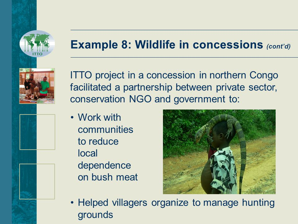 Example 8: Wildlife in concessions (cont'd) ITTO project in a concession in northern Congo facilitated a partnership between private sector, conservation NGO and government to: Work with communities to reduce local dependence on bush meat Helped villagers organize to manage hunting grounds