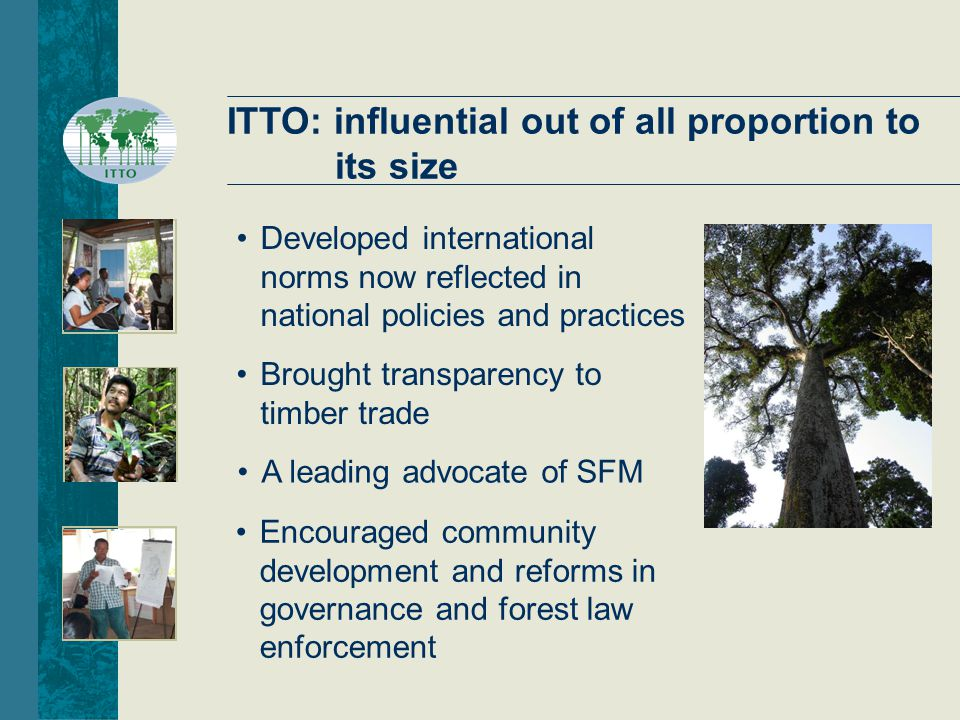 ITTO: influential out of all proportion to its size Brought transparency to timber trade Developed international norms now reflected in national policies and practices Encouraged community development and reforms in governance and forest law enforcement A leading advocate of SFM