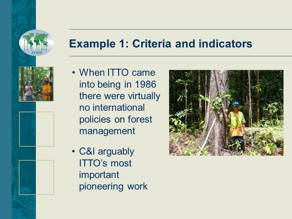 When ITTO came into being in 1986 there were virtually no international policies on forest management C&I arguably ITTO's most important pioneering work Example 1: Criteria and indicators