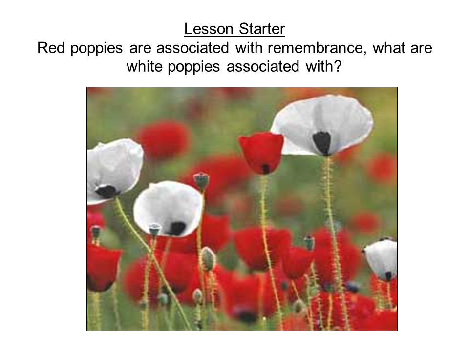 Lesson Starter Red poppies are associated with remembrance, what are white poppies associated with