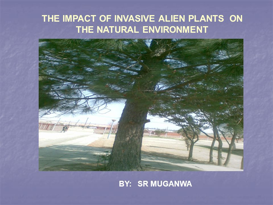 THE CHALLENGES LITTLE OR NO EASILY AVAILABLE LITERATURE ON ALIEN PLANTS IN BOTH SCHOOL AND COMMUNITY LIBRARIES.
