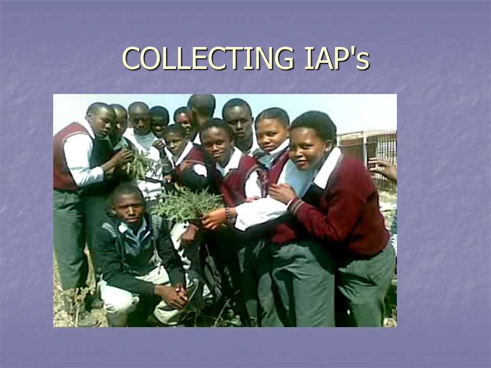 COLLECTING IAP's