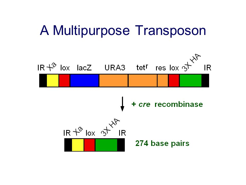 Identification of Tumor Suppressors Using RNAi Klofcshoten et al.