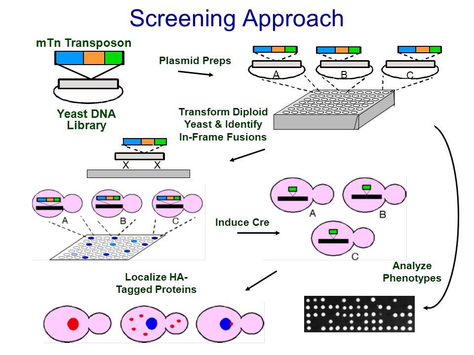 Identification of Tumor Suppressors Using RNAi Klofschoten et al.
