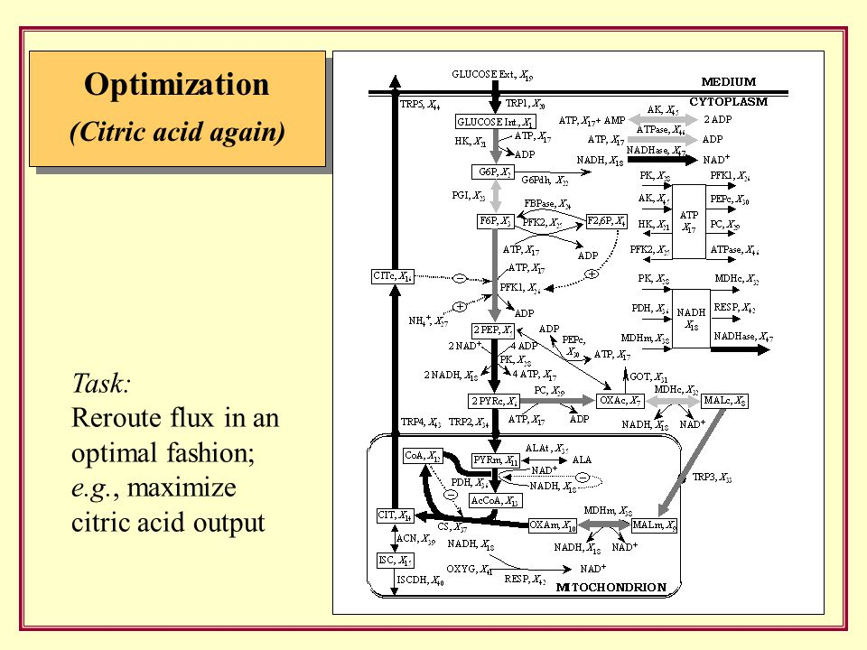 Optimization (Citric acid again) Task: Reroute flux in an optimal fashion; e.g., maximize citric acid output