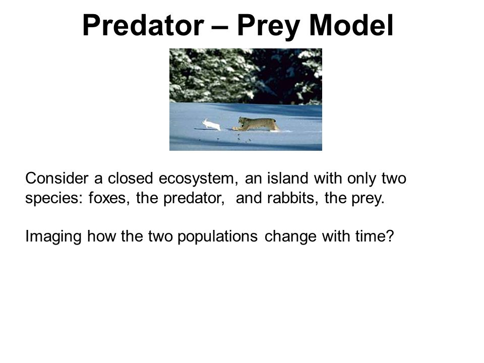 Predator – Prey Model Consider a closed ecosystem, an island with only two species: foxes, the predator, and rabbits, the prey.