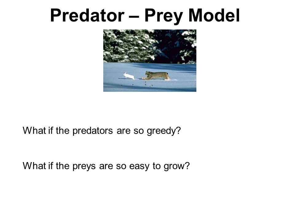 Predator – Prey Model What if the predators are so greedy? What if the preys are so easy to grow?