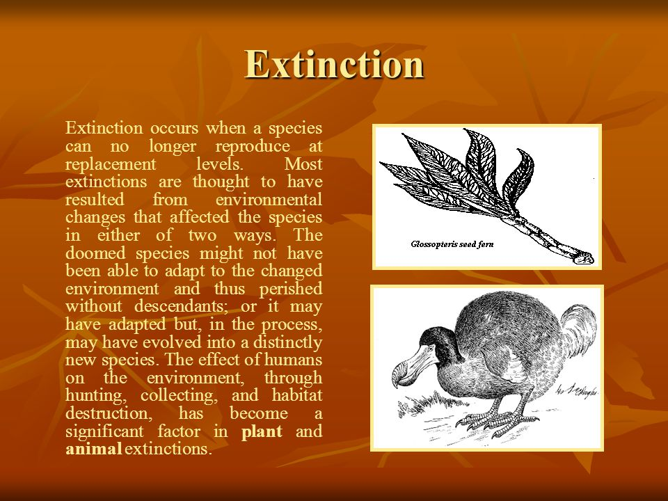Extinction Extinction occurs when a species can no longer reproduce at replacement levels.
