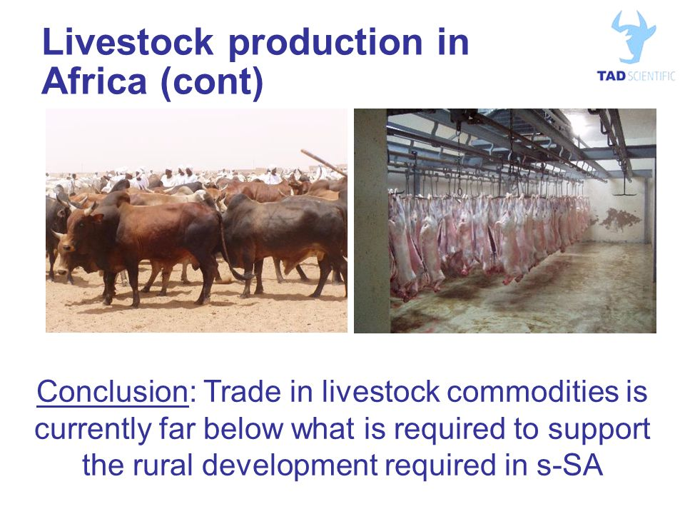 Livestock production in Africa (cont) Conclusion: Trade in livestock commodities is currently far below what is required to support the rural development required in s-SA
