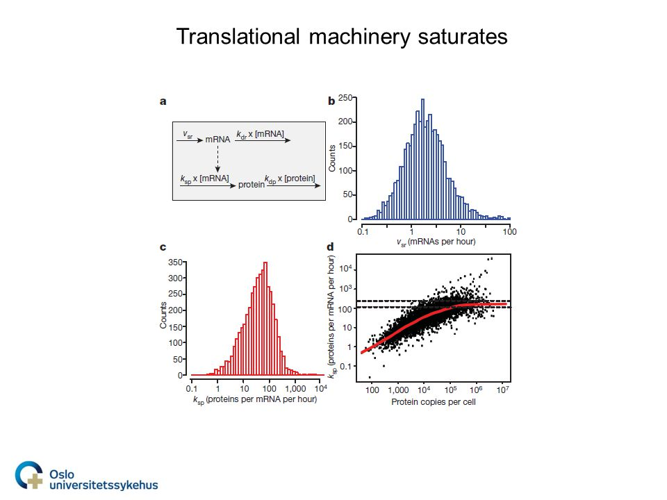 Translational machinery saturates