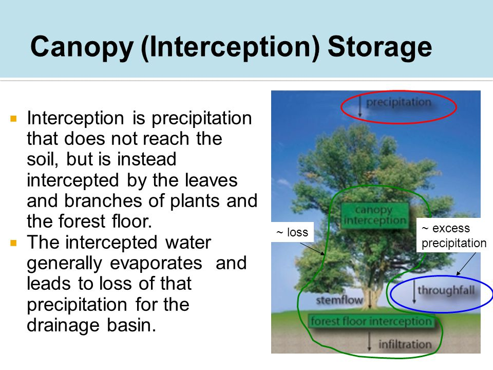  Interception is precipitation that does not reach the soil, but is instead intercepted by the leaves and branches of plants and the forest floor.