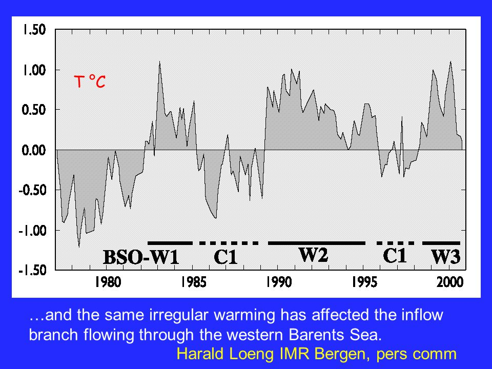 …and the same irregular warming has affected the inflow branch flowing through the western Barents Sea.