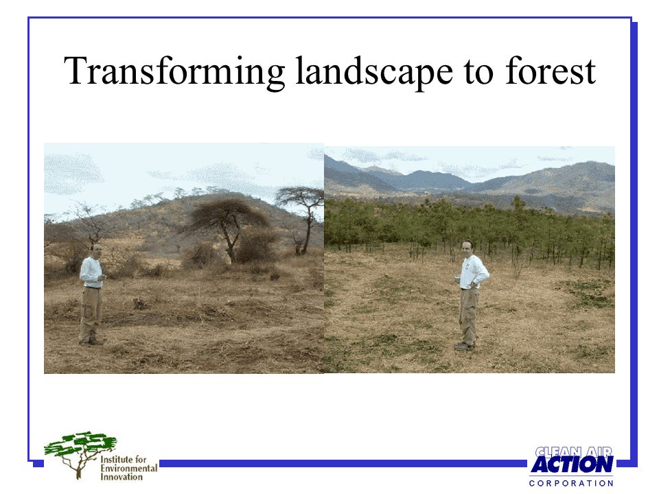 Transforming landscape to forest