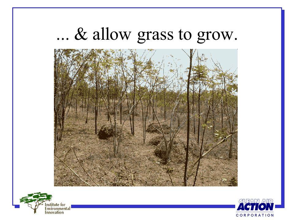 ... & allow grass to grow.