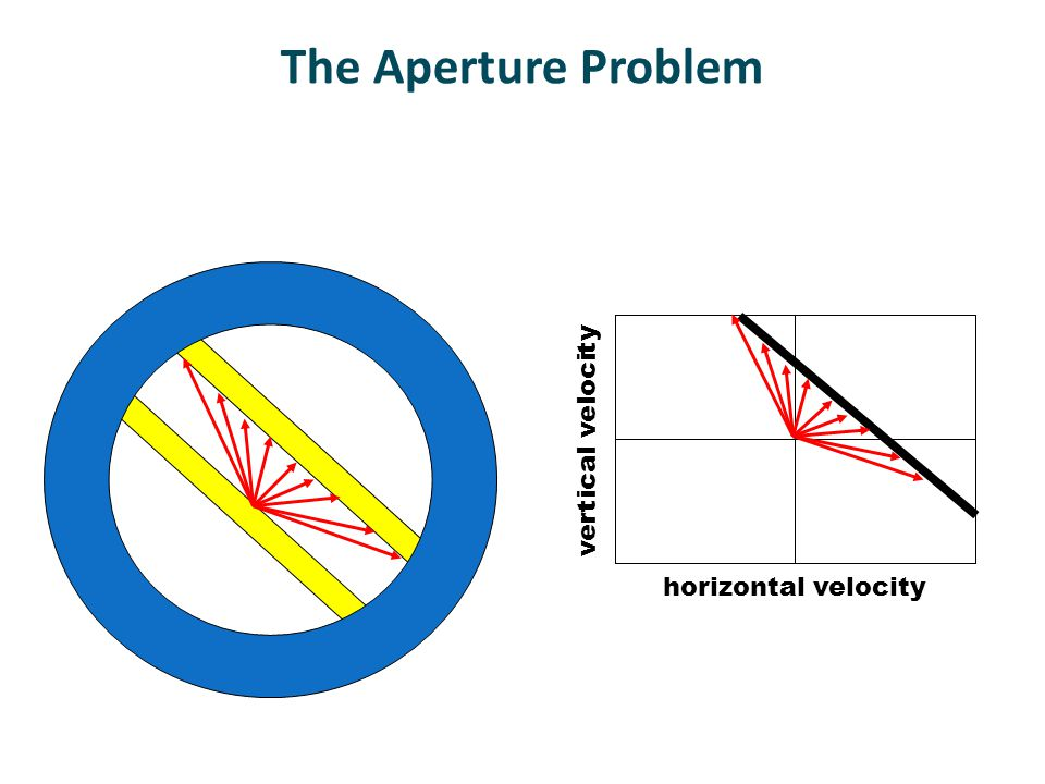 Horizontal velocity (deg/s) Vertical velocity (deg/s) horizontal velocity vertical velocity