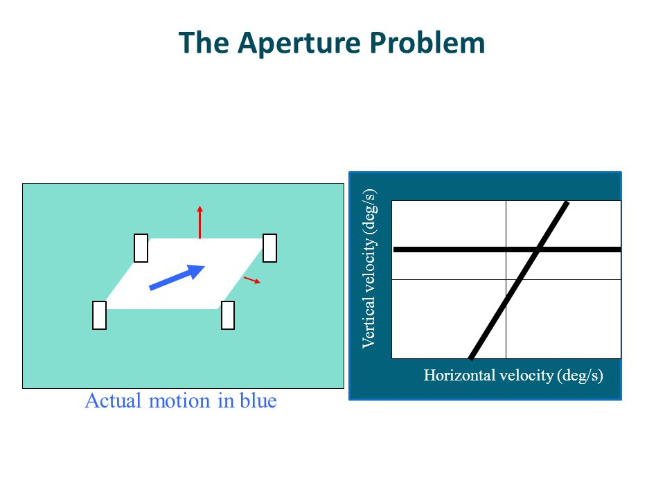 The Aperture Problem Horizontal velocity (deg/s) Vertical velocity (deg/s) Actual motion in blue