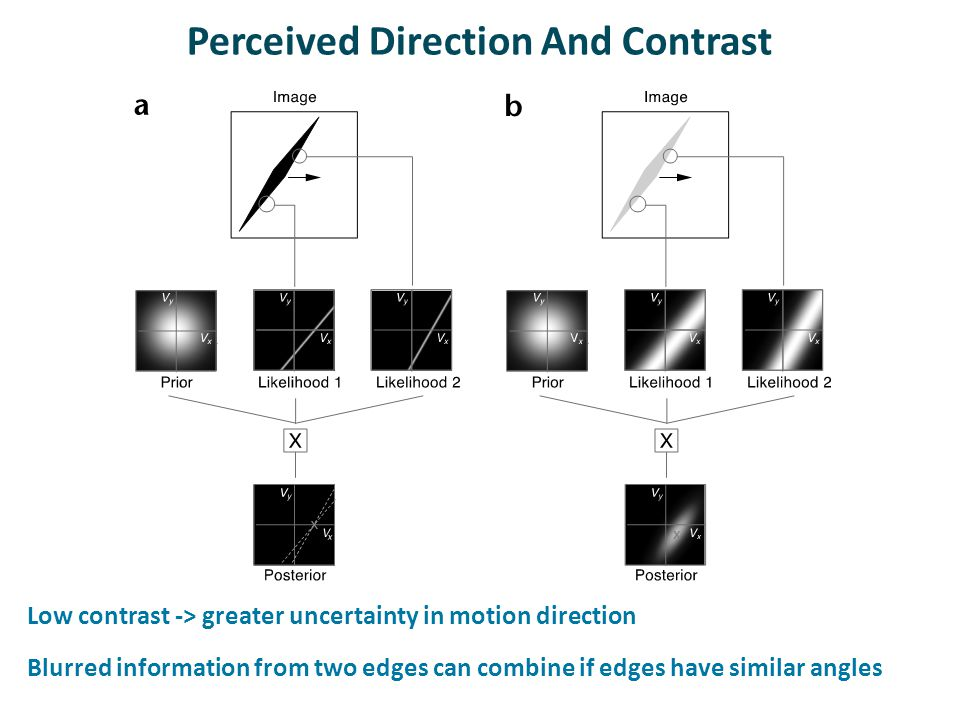 Perceived Direction And Contrast Low contrast -> greater uncertainty in motion direction Blurred information from two edges can combine if edges have similar angles