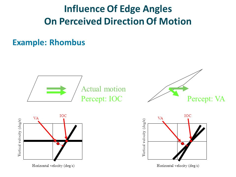 Influence Of Edge Angles On Perceived Direction Of Motion Example: Rhombus Horizontal velocity (deg/s) Vertical velocity (deg/s) IOC VA Horizontal velocity (deg/s) Vertical velocity (deg/s) IOC VA Percept: VAPercept: IOC Actual motion