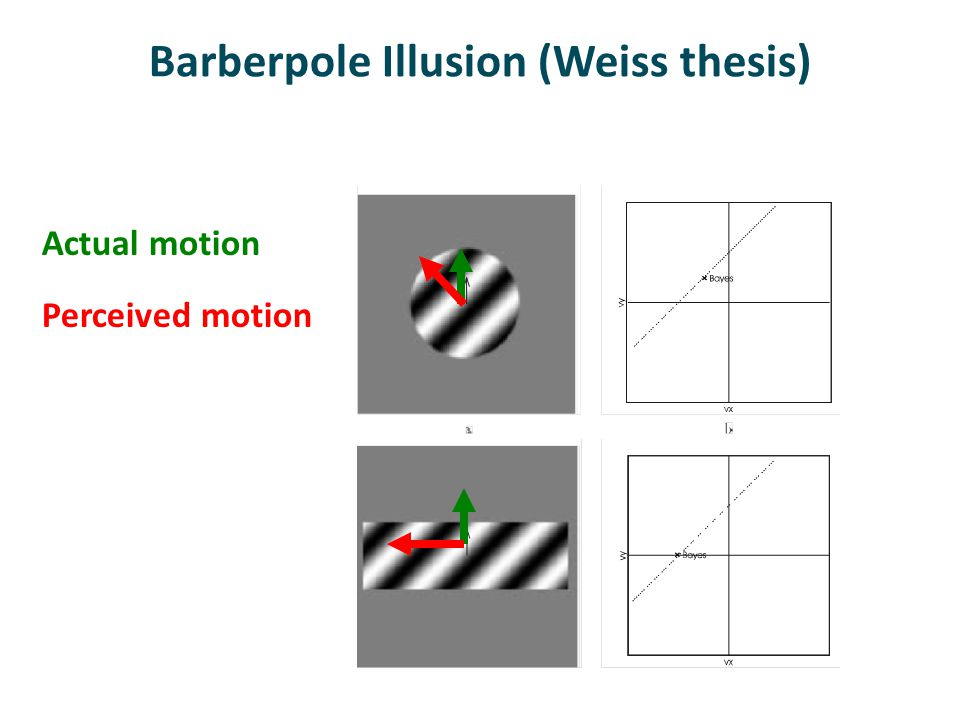 Barberpole Illusion (Weiss thesis) Actual motion Perceived motion