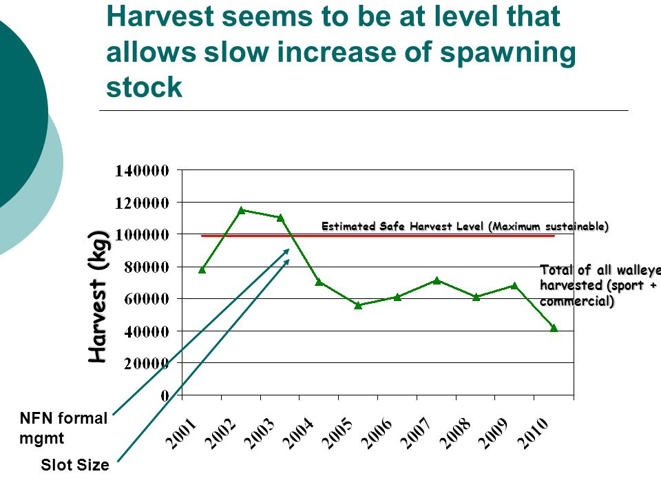 Harvest seems to be at level that allows slow increase of spawning stock Harvest (kg) Estimated Safe Harvest Level (Maximum sustainable) Total of all walleye harvested (sport + commercial) NFN formal mgmt Slot Size