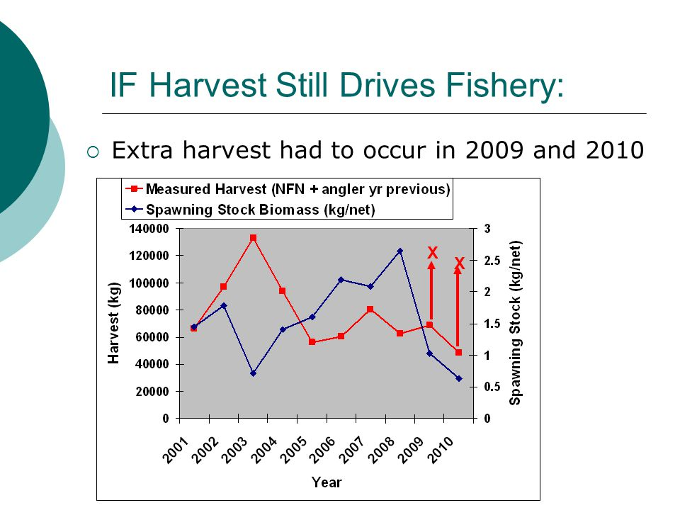 IF Harvest Still Drives Fishery:  Extra harvest had to occur in 2009 and 2010 X X