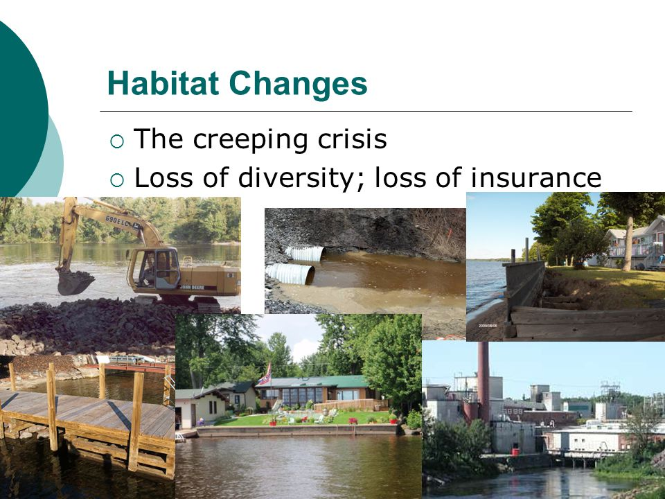 Habitat Changes  The creeping crisis  Loss of diversity; loss of insurance