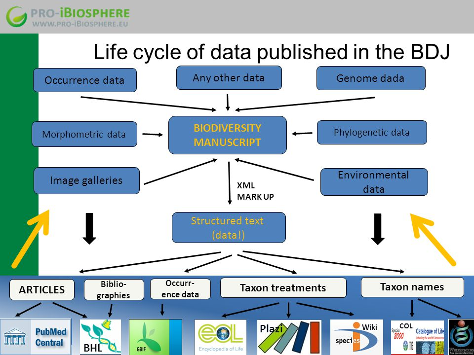 Life cycle of data published in the BDJ BIODIVERSITY MANUSCRIPT Occurrence data Genome dada Image galleries Morphometric data Environmental data Phylogenetic data Any other data XML MARK UP Structured text (data!) ARTICLES Occurr- ence data Taxon names Taxon treatments Plazi BHL Wiki COL Biblio- graphies