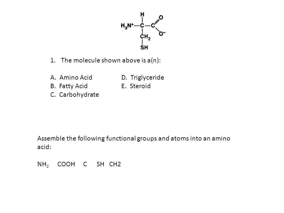 1.The molecule shown above is a(n): A. Amino AcidD.