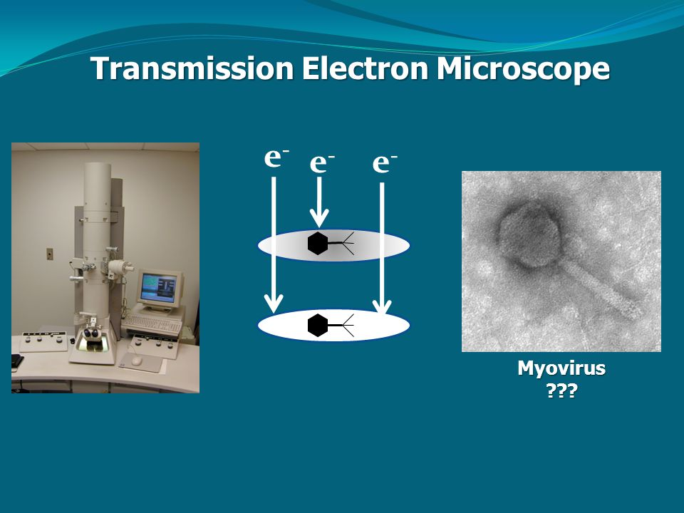 Transmission Electron Microscope Myovirus e-e- e-e- e-e-