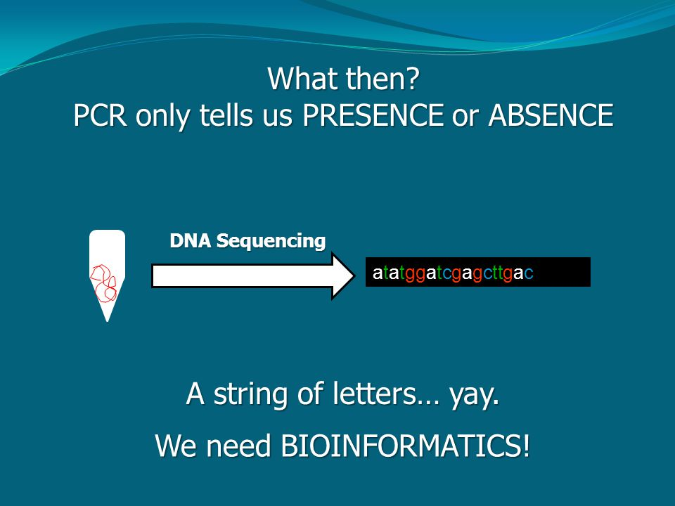 What then? PCR only tells us PRESENCE or ABSENCE DNA Sequencing atatggatcgagcttgac A string of letters… yay. We need BIOINFORMATICS!