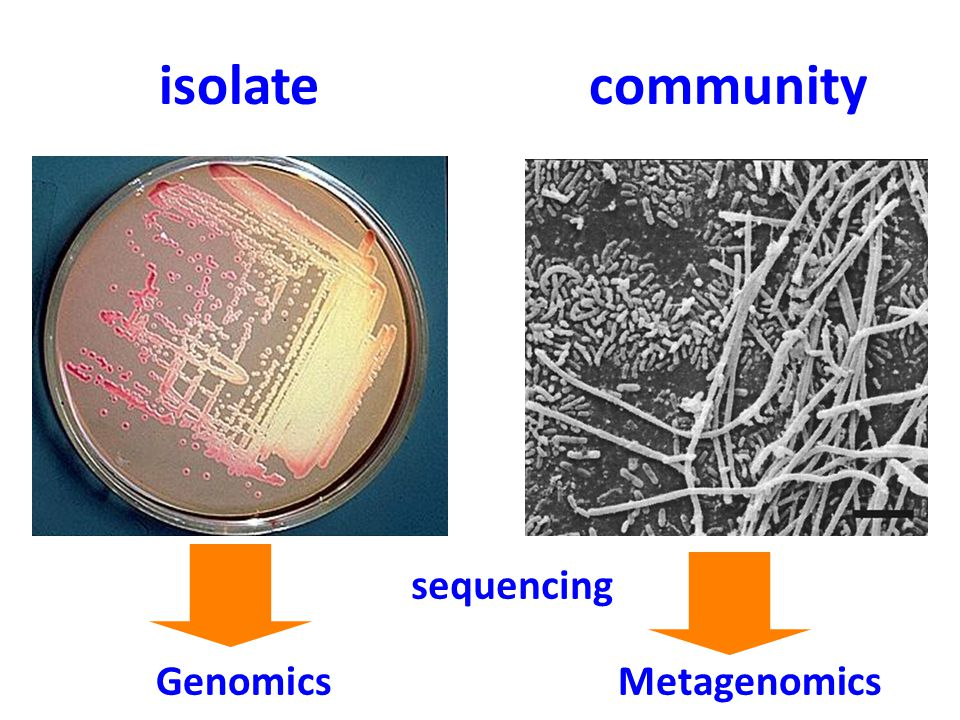 isolate Genomics Metagenomics community sequencing