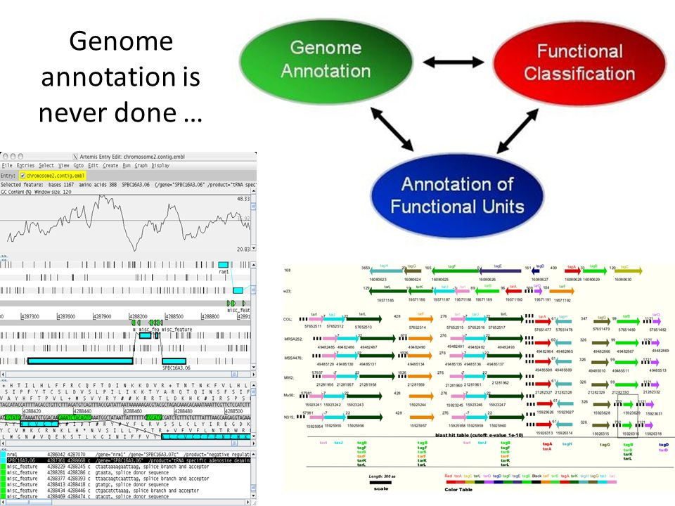Genome annotation is never done …